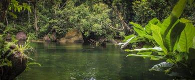 Rio da floresta úmida foto de stock