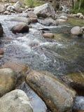 Rio da floresta úmida Fotos de Stock Royalty Free