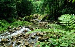 Rio da floresta úmida Imagem de Stock Royalty Free