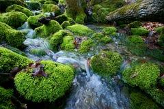 Rio da floresta Fotografia de Stock