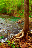 Rio da floresta Foto de Stock