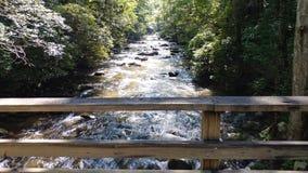 Rio da floresta com corredeira foto de stock