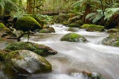 Rio da floresta húmida Imagem de Stock