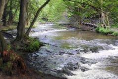 Rio da floresta na mola adiantada Imagens de Stock Royalty Free