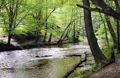 Rio da floresta na mola adiantada Fotografia de Stock Royalty Free