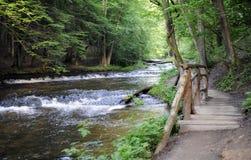 Rio da floresta na mola adiantada Fotos de Stock Royalty Free