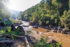 Rio da lama na floresta fotografia de stock