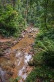 Rio da lama na floresta tropical do santuário de Khao Sok, Tailândia Foto de Stock