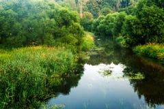 Rio da manhã do verão Fotografia de Stock