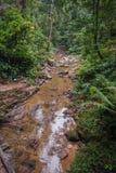 Rio da maré baixa na floresta tropical do santuário de Khao Sok, Thail Imagem de Stock Royalty Free
