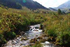 Rio da montanha da água de mola e a angra rochosa bonita em Cáucaso norte foto natural da paisagem da montanha imagem de stock royalty free