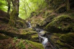 Rio da montanha com rochas Fotos de Stock Royalty Free