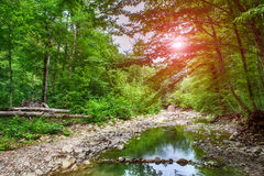 Rio da montanha da paisagem do verão Fotografia de Stock Royalty Free