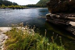 Rio da montanha do verão Rio Biya de Altay Imagens de Stock Royalty Free
