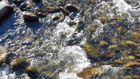 Rio da montanha da mola vídeos de arquivo