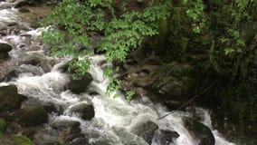 Rio da montanha na floresta verde video estoque