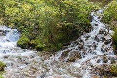 Rio da montanha nas montanhas Carpathian fotos de stock
