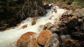 Rio da montanha no fim da floresta acima verão vídeos de arquivo