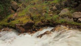 Rio da montanha no fim da floresta acima verão filme