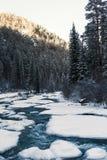 Rio da montanha no inverno entre os abetos Imagem de Stock
