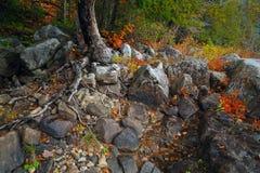 Rio da montanha no tempo do outono Fotos de Stock