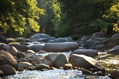Rio da montanha no vale de Restonica Imagens de Stock Royalty Free