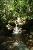Rio da montanha, Pelion, Grécia Imagem de Stock
