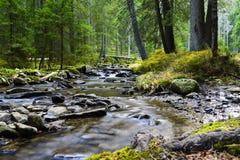 Rio da montanha que corre através do córrego verde da floresta na madeira fotografia de stock royalty free