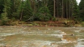 Rio da montanha que flui na paisagem natural bonita da floresta verde filme