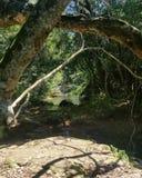 Rio da selva Imagem de Stock