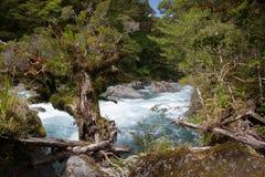 Rio da selva Fotografia de Stock
