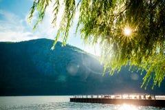 Rio das árvores das montanhas fotografia de stock royalty free