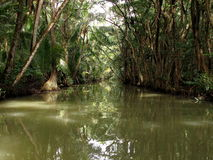 Rio das caraíbas em Dominica Island Imagem de Stock Royalty Free