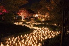 Rio das velas entre as árvores foto de stock royalty free