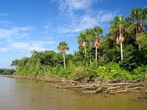 Rio de Amazon imagem de stock