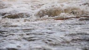 Rio de borbulhagem da montanha wildlife Um rio raging da montanha na primavera vídeos de arquivo