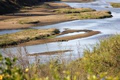 Rio de crocodilo Foto de Stock Royalty Free