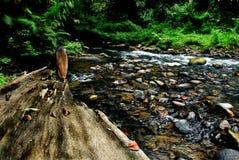Rio de Eco Fotografia de Stock
