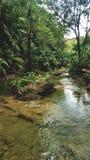 Rio de Forrest em Lagaan Fotos de Stock Royalty Free