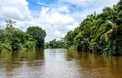 Rio de Frio na selva de Costa-Rica. Imagem de Stock