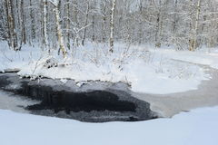 Rio de giro da floresta no branco da floresta do vidoeiro da neve Imagens de Stock Royalty Free