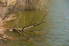 Rio de Ingulets na primavera, fragmento da árvore caída Fotos de Stock