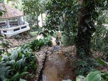 Rio de janeiro Botanical Garden Waterfall fotos de stock