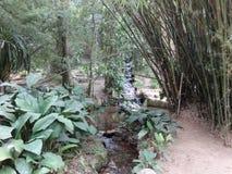 Rio de janeiro Botanical Garden Waterfall fotografia de stock