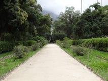 Rio de Janeiro Botanical Garden Way image stock