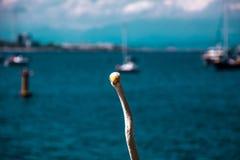 White bird - heron - on a summer beach scenario in Rio de Janeir. Rio de Janeiro, Brazil - December, 2017. White bird - heron - on a summer beach scenario in Rio Stock Images