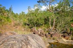 Rio de Janeiro på tips i berg sörjer Ridge Forest Reserve, Belize Royaltyfri Foto