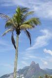 Rio de Janeiro Palm Tree Two Brothers Mountain Brazil Royalty Free Stock Image