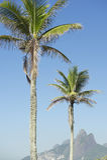 Rio de Janeiro Palm Trees Two-Broersberg Brazilië Stock Foto's