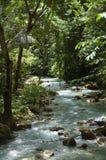 Rio de Kawasan em Cebu, Filipinas Fotos de Stock